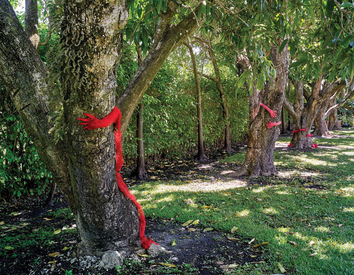 Tree Huggers embrace the mango trees that line her property.